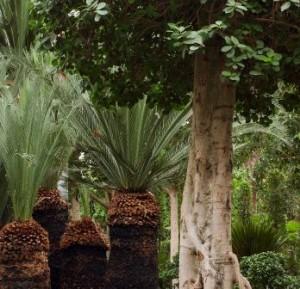 Planten voor Kalender 200528/09/2004 - D1x 28Nieuwkoop De Kwakel